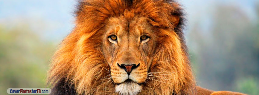 Lion Face Cover Photo