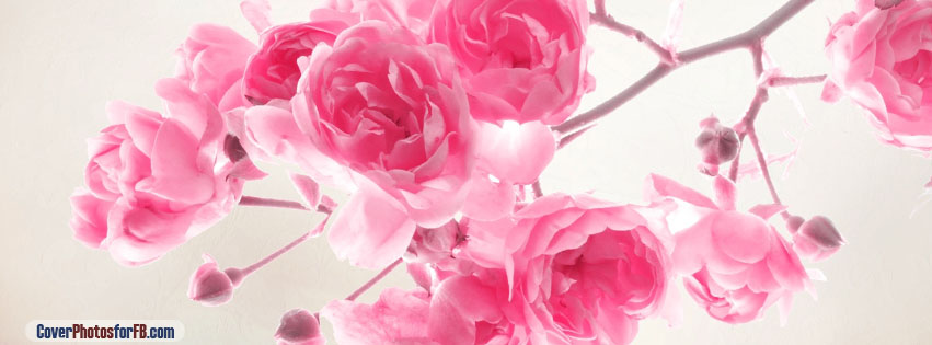 Pink Roses Flowers Cover Photo