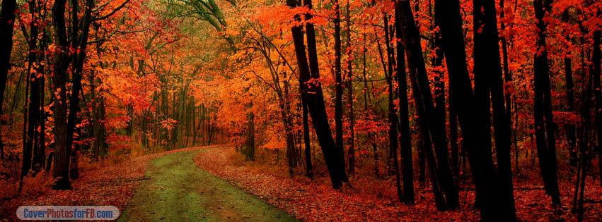 Orange Forest Cover Photo