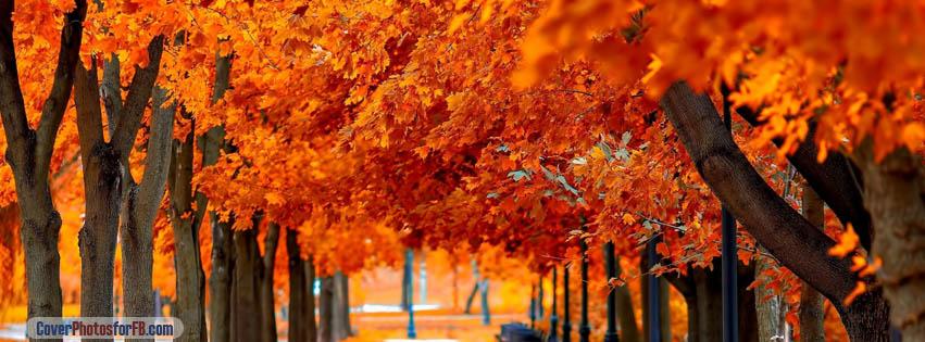 Orange Trees Fall Cover Photo