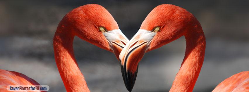 Flamingos Cover Photo