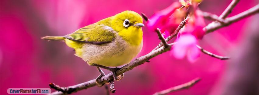 Spring Yellow Bird Cover Photo