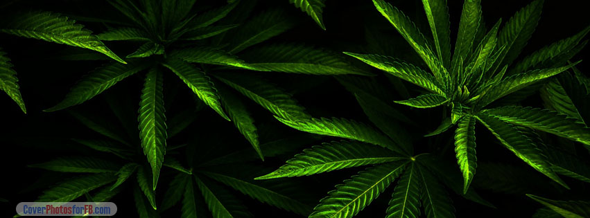 Cool Weed Wallpapers 55 Wallpapers  HD Wallpapers