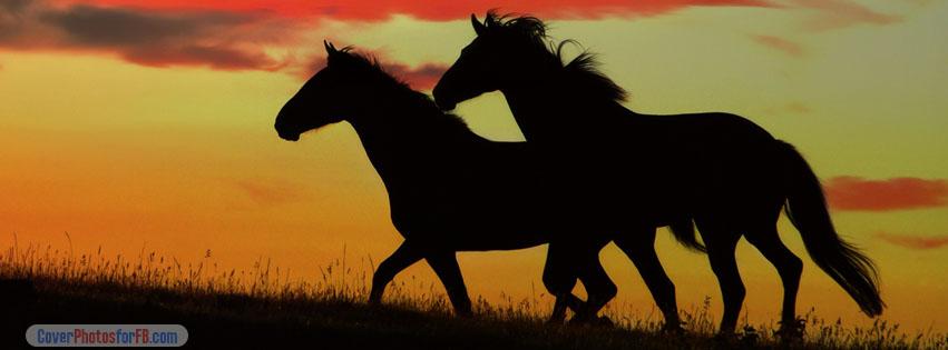 Black Horses Running Cover Photo