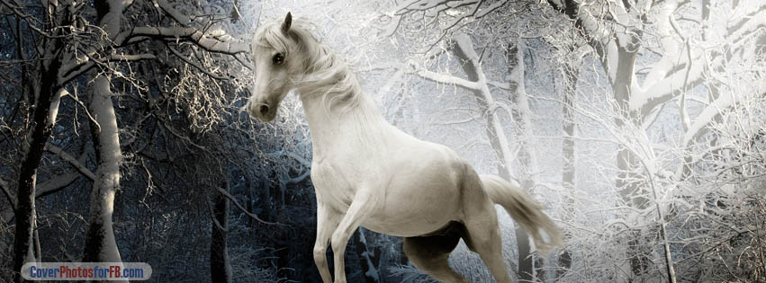 White Horse Snowy Tree Cover Photo