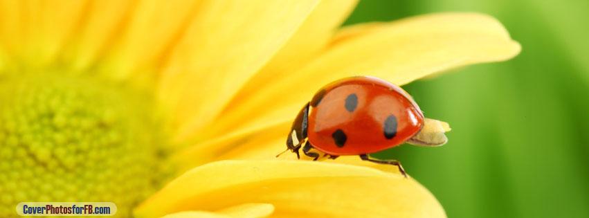Ladybug On Yellow Flower Cover Photo