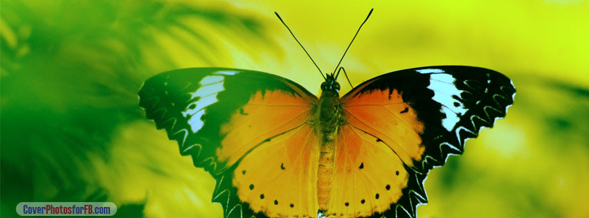 Black Yellow Orange Butterfly Cover Photo