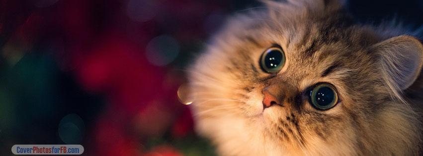 Cute Kitten Cover Photo