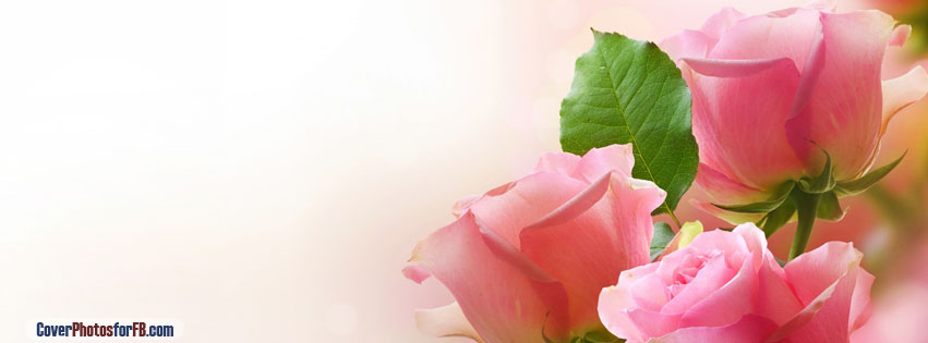 Three Light Pink Roses Cover Photo