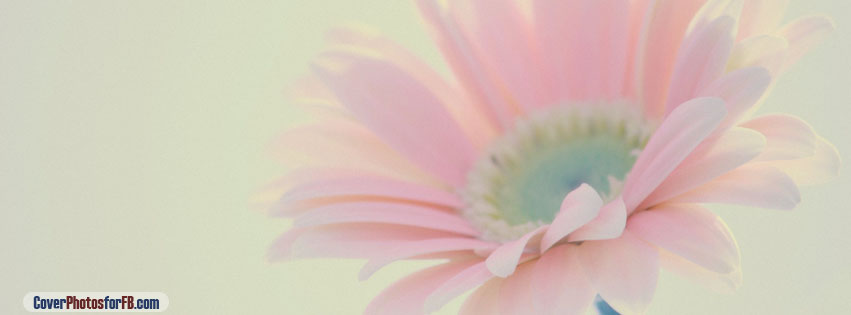 Pink Flower Cover Photo