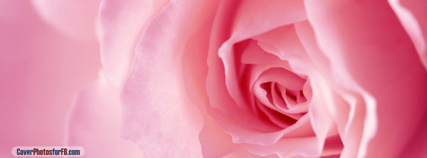Light Pink Rose Macro Cover Photo