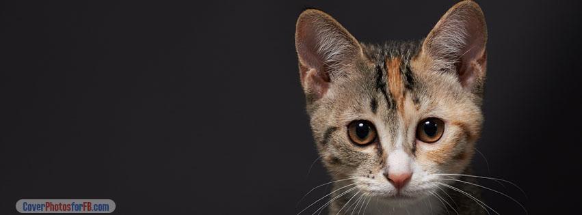 Cute Kitten Face Cover Photo