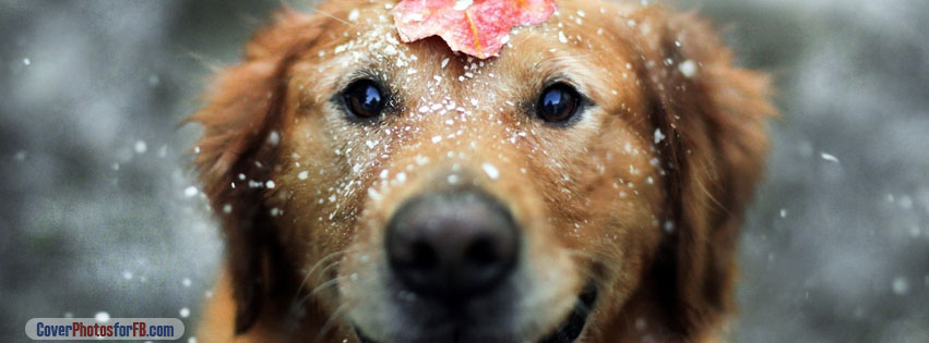 Dog And Snow Cover Photo