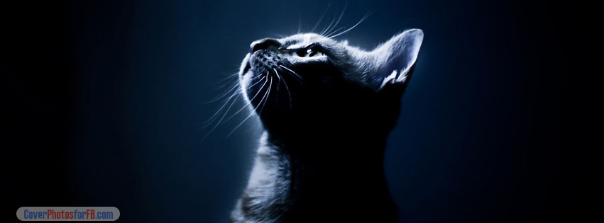 Kitten In The Dark Cover Photo