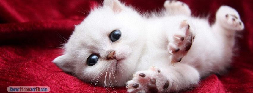 Kitten Begging Cutely Cover Photo