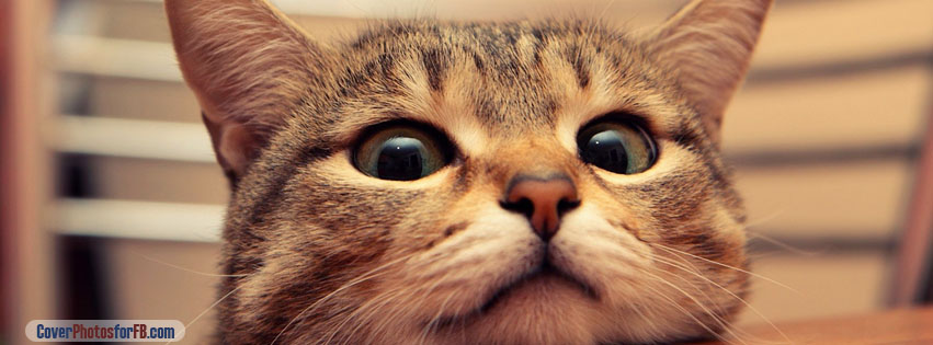Hungry Cat Cover Photo