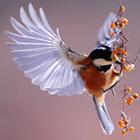 Bird Cover Photos