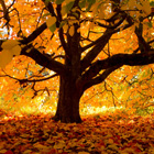 Autumn Cover Photos