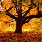 Autumn Cover Photos