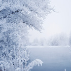 Winter Cover Photos