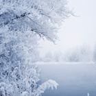 Winter Cover Photos