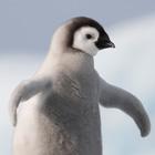 Antarctica Cover Photos