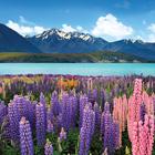 New Zealand Cover Photos
